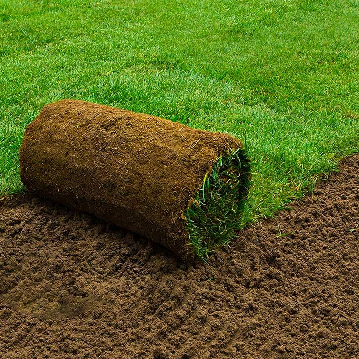 Zakładanie ogrodów bydgoszcz