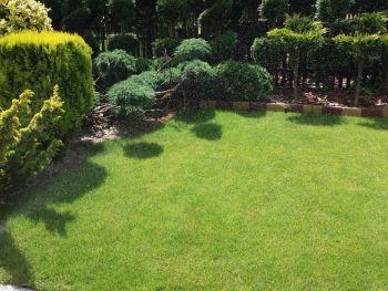 rabata w ogrodzie na zielonej trawie