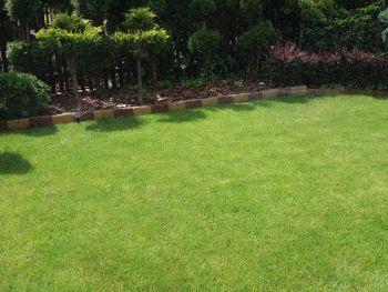 nasadzenia i na zielonym trawniku