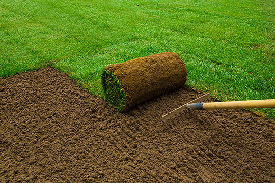 Trawa z rolki, zakładanie ogrodu